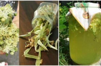 Корисні властивості липового лимонаду - плюс рецепт
